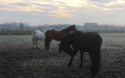 La ferme du Marais : la thérapie à Wiers